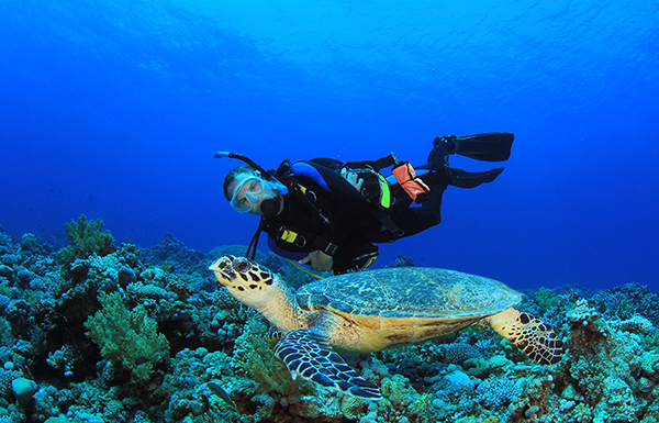 Cozumel mexico weddings packages destination weddings - Cozumel dive packages ...